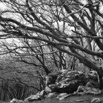 forêt des couloumates
