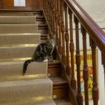 le chat du musée