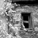 Fenêtre envahie