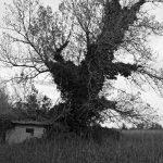 arbre au bocal du tech