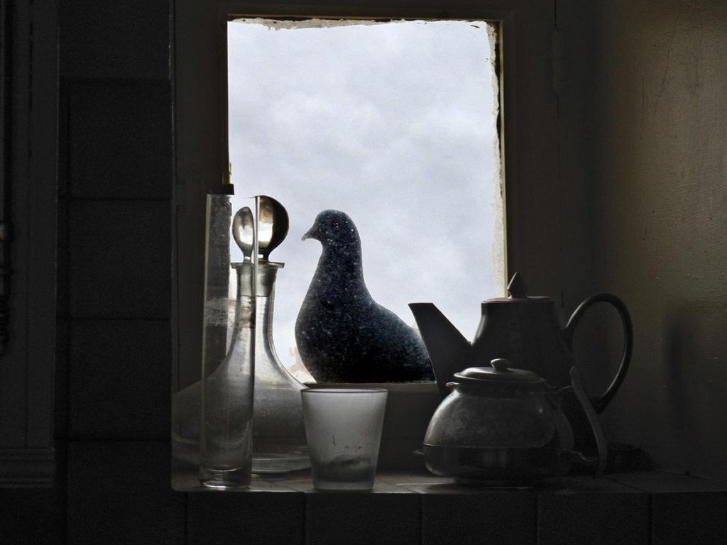 pigeon à la fenêtre